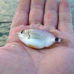 К 2050 году человечество может остаться без рыбы
